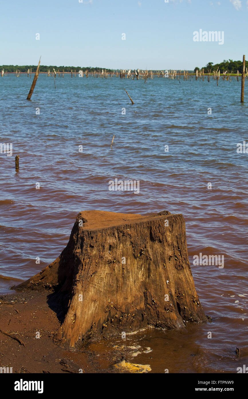 Trunks of dead trees in the indigenous reservation of the tribe Ava Guarany in the district of Santa Rosa Ocoy - Stock Image