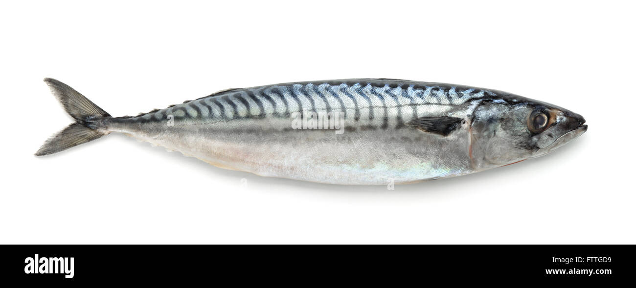 Fresh atlantic mackerel isolated on white - Stock Image