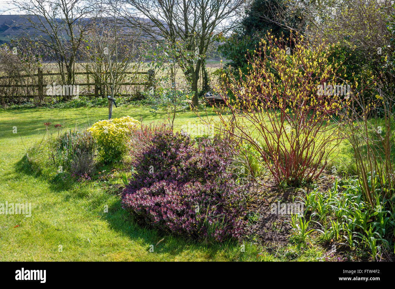 Peninsular border in early spring showing hebe and cornus - Stock Image