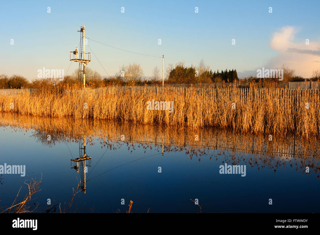Sankey Canal at dawn showing the reed beds along the banks by Widnes Warth Nature Reserve. Stock Photo