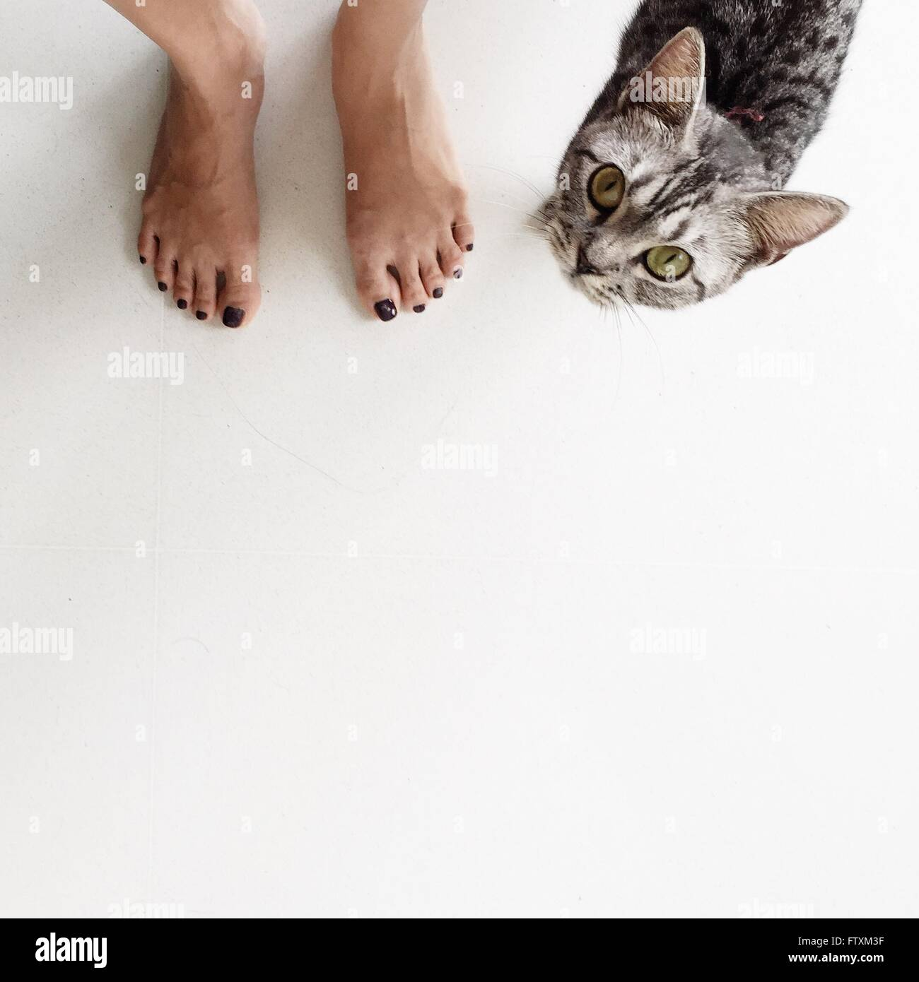 Low section of a woman standing next to a cat Stock Photo