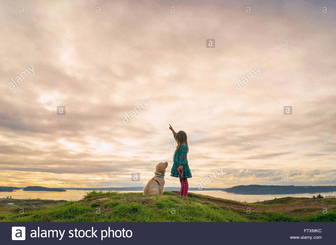 Young girl training golden retriever puppy dog - Stock Image