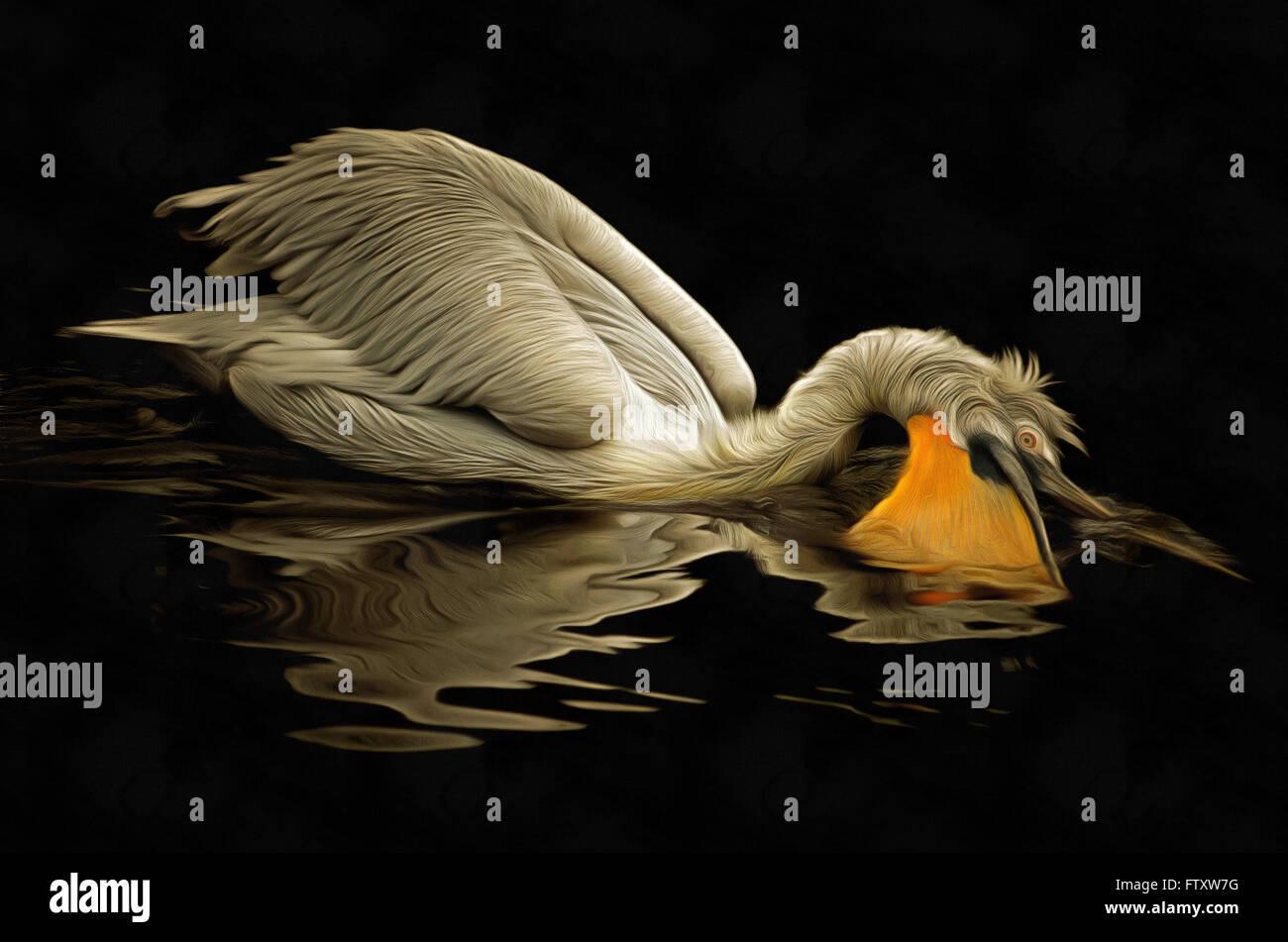 Floating Dalmatian pelican - hunting pelican - Stock Image