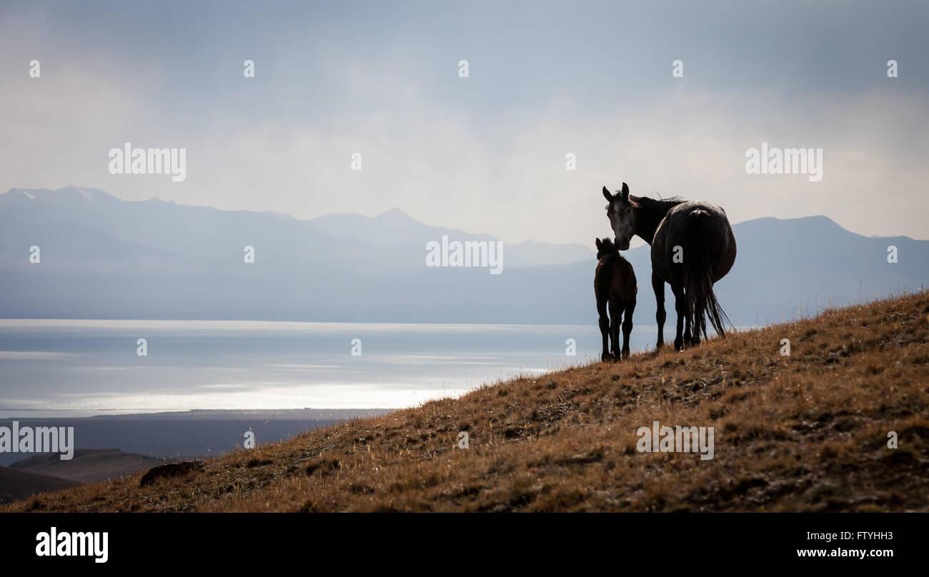 Kyrgyzstan, Kirghizistan, Song Kul lake - Stock Image