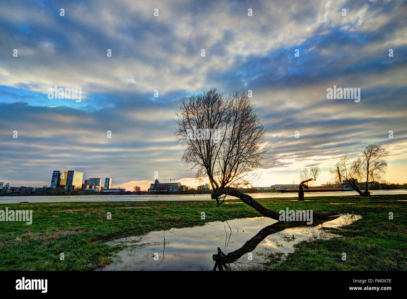 Rhine meadows with reflection at Duesseldorf during floods of river rhine - Stock Image