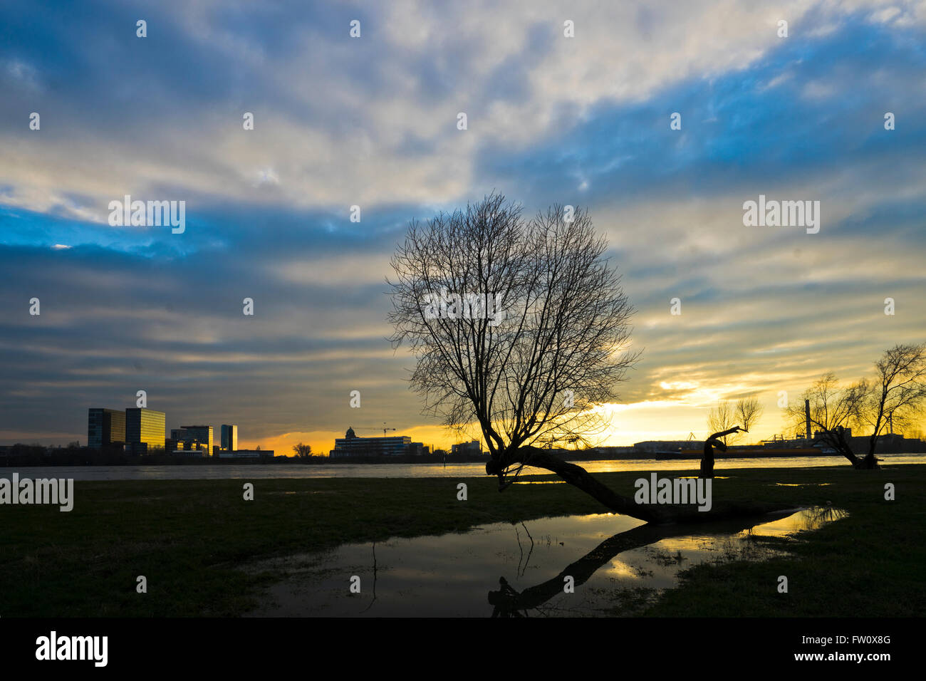 Rhine meadows at Duesseldorf during floods of river rhine - Stock Image