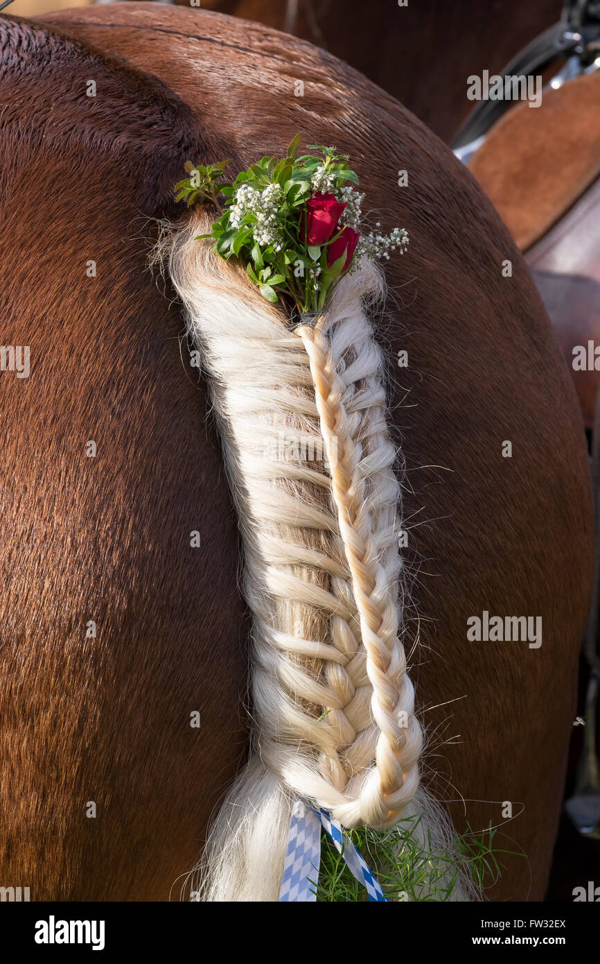 Decorated and braided horse tail, Leonhardi procession at the Benediktbeuern Abbey, Upper Bavaria, Bavaria, Germany Stock Photo
