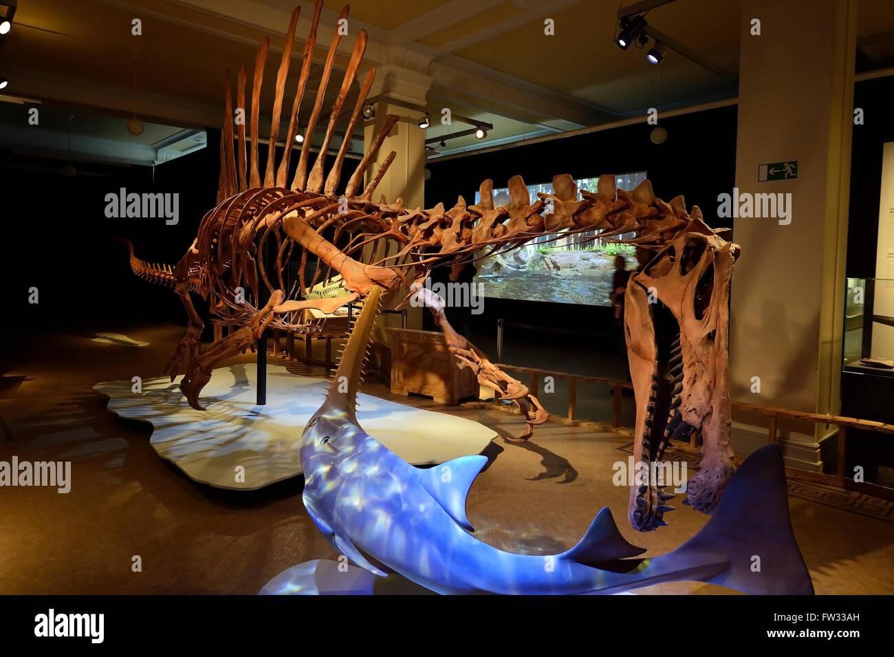 Worldwide unique skeleton replica of the biggest carnivorous dinosaur (Spinosaurus aegyptiacus), Naturkundemuseum Stock Photo