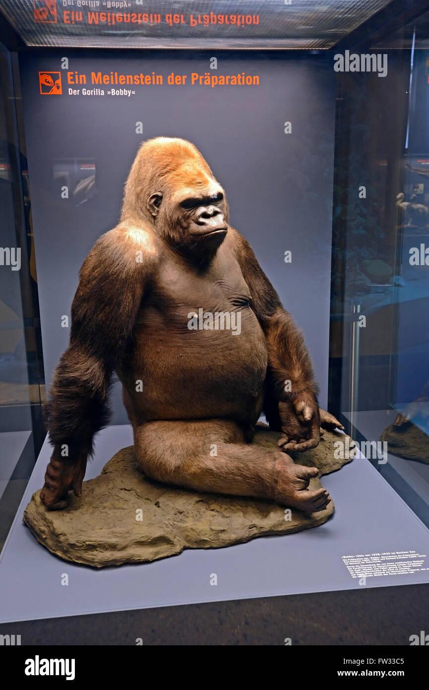 Gorilla Bobby