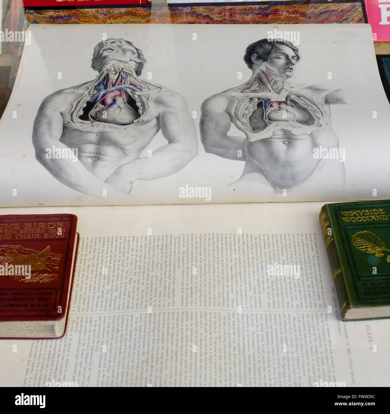 Anatomy Book Stock Photos & Anatomy Book Stock Images - Alamy
