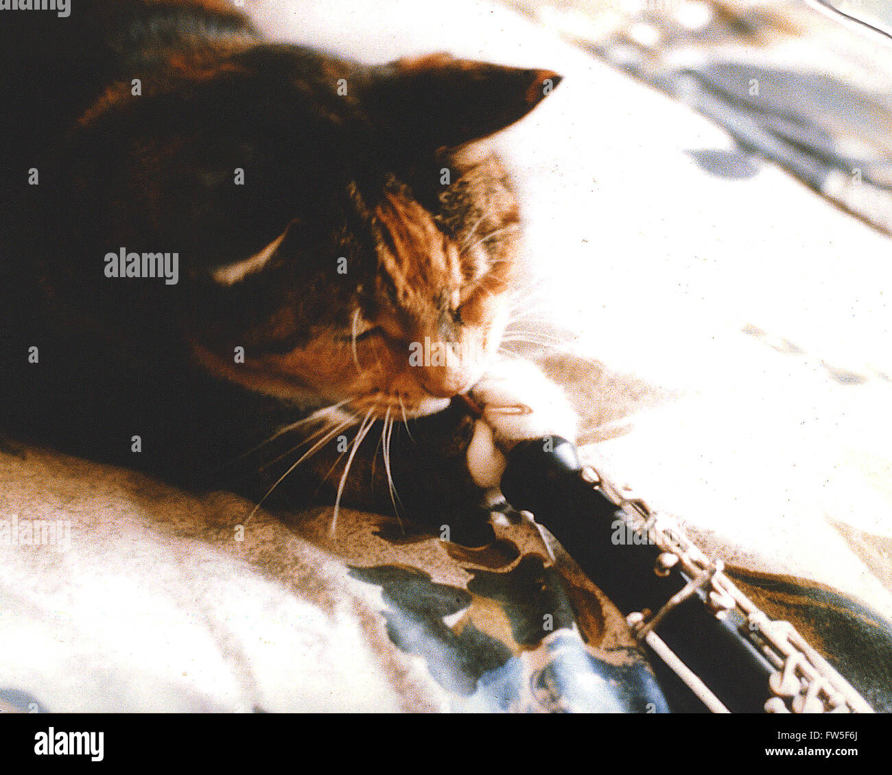 Cat 'playing' oboe. Titled: 'Pushkin the Famous oboe-playing cat'.  Cute - Stock Image