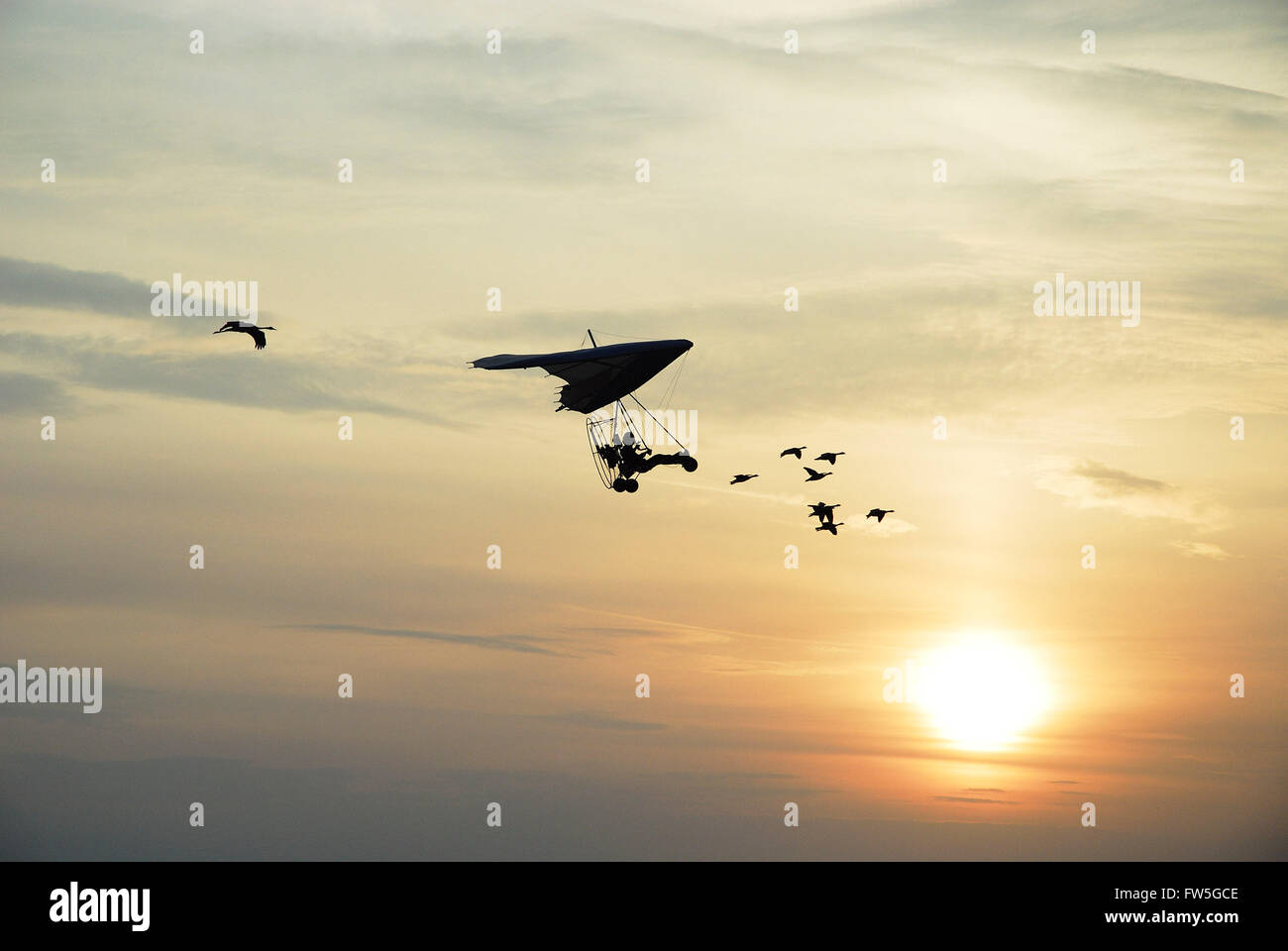 Airfield concert - Vol avec les Oiseaux at the Sywell Aerodrome, Northamptonshire, UK. - Stock Image
