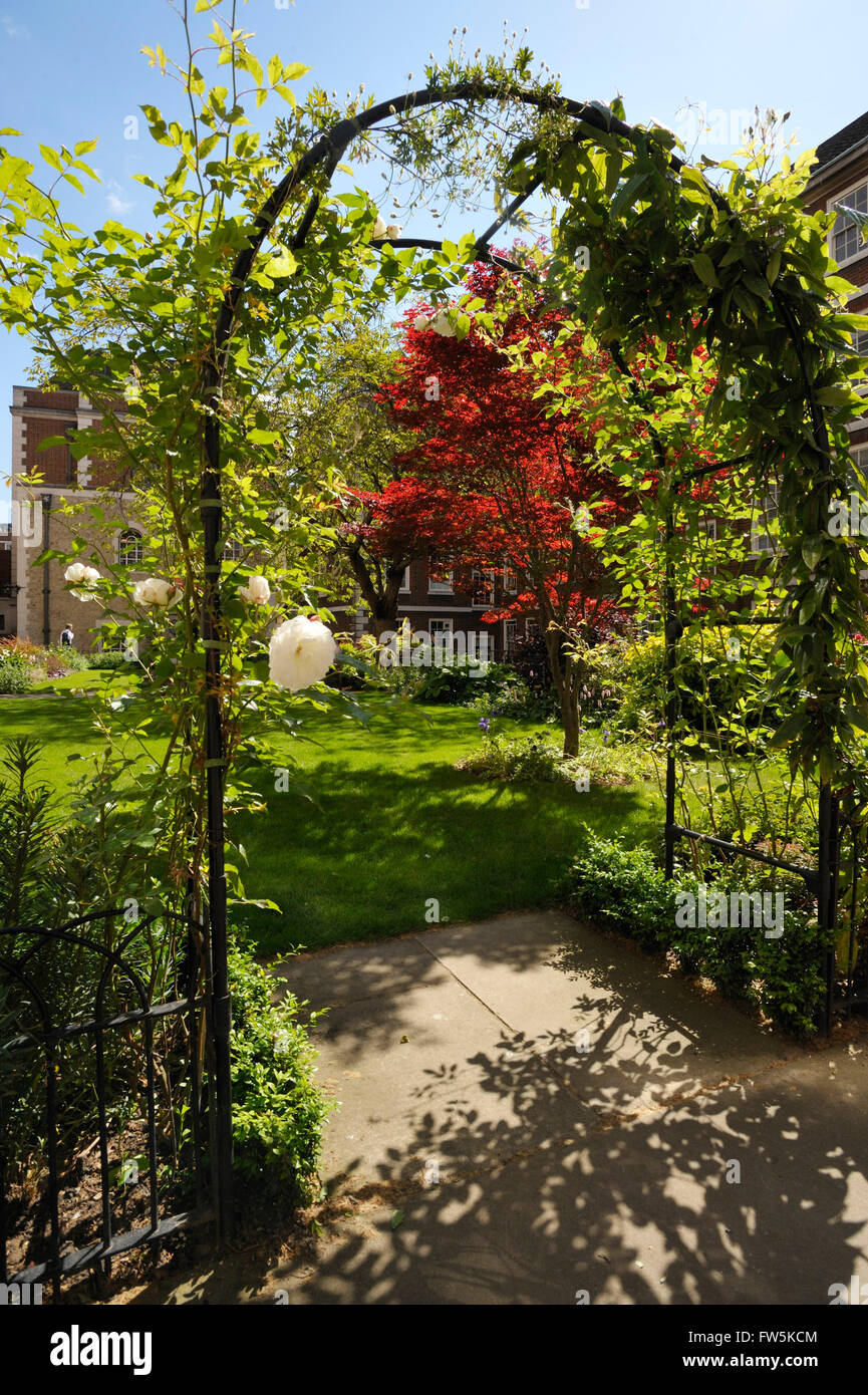 Pump Court, with roses (named by Shakespeare as the source of the Wars of the Roses), Middle Temple, London, above - Stock Image