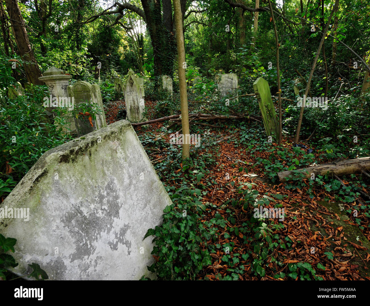 neglected graves in woodland: Nunhead Cemetery, Peckham, London. English novelist Charles Dickens lived with Ellen - Stock Image