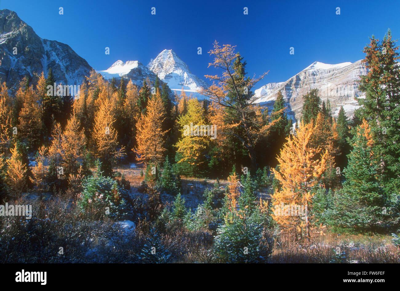Mount Assiniboine Provincial Park in Autumn, British Columbia, Canada Stock Photo