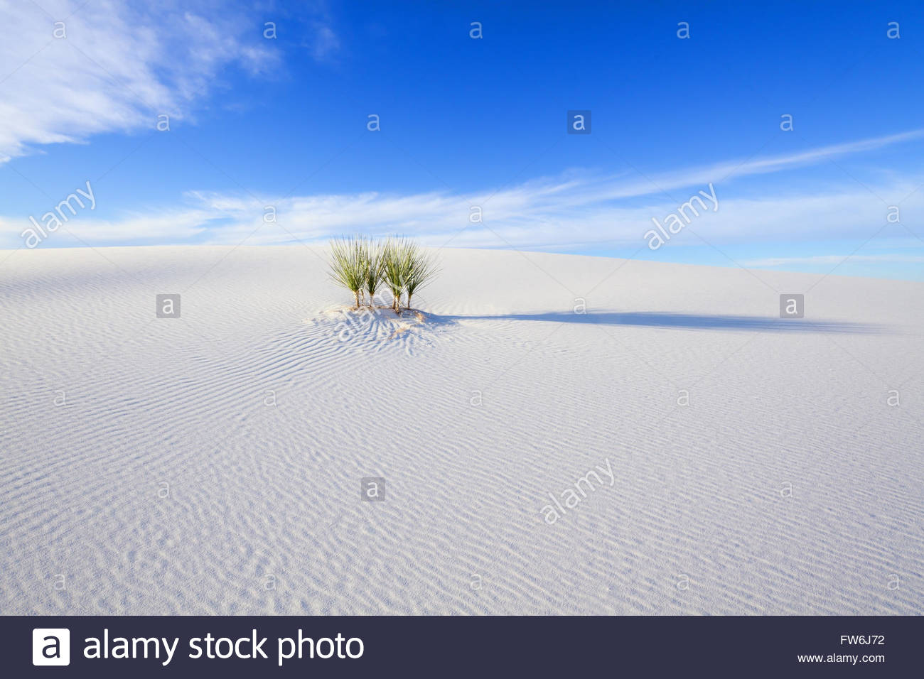Yucca and Blue Sky, White Sands National Monument - Stock Image