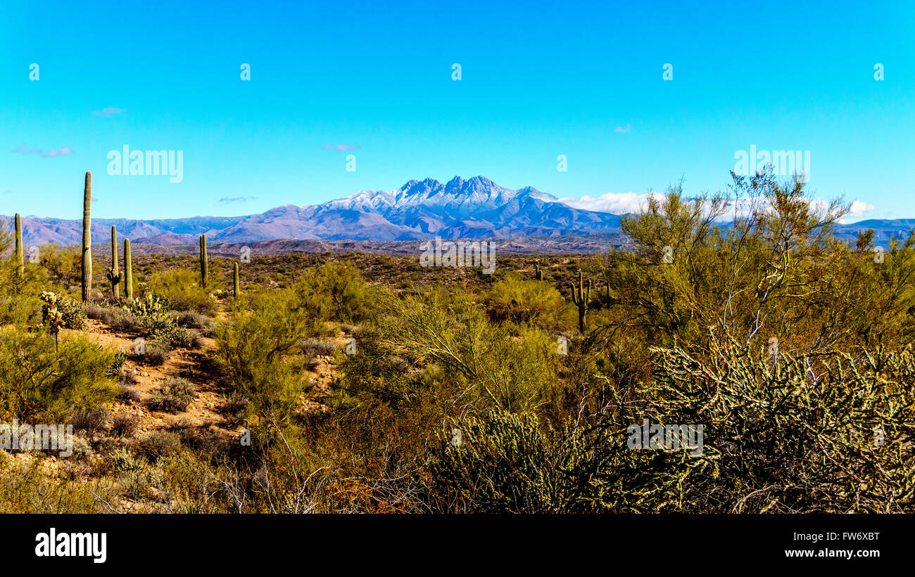 Semi desert region of central Arizona covered in shrubbery and Saguaro cacti - Stock Image