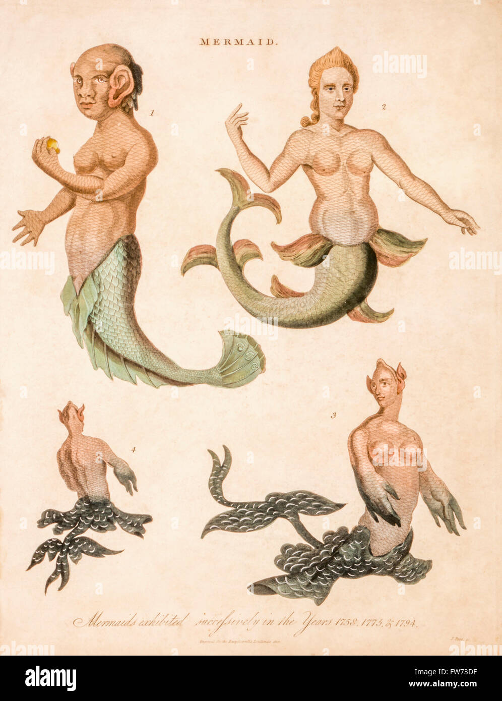 Mermaids, a plate  from Encyclopaedia Londinensis, 1817 - Stock Image