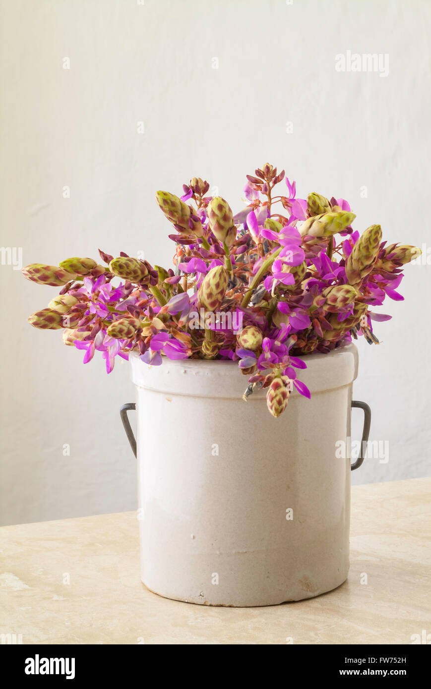 Wild purple flowers In a Stoneware Jar on table top with copy space. - Stock Image
