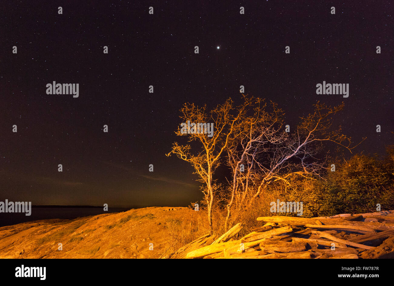 Driftwood and Garry Oak Tree with stars in night sky at Cattle Point-Victoria, British Columbia, Canada. - Stock Image