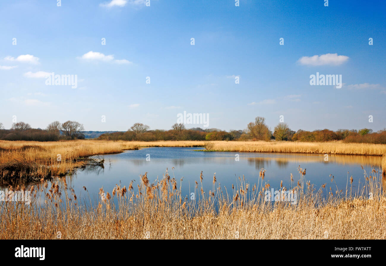 A view of a National Nature Reserve by the River Yare at Surlingham, Norfolk, England, United Kingdom. - Stock Image
