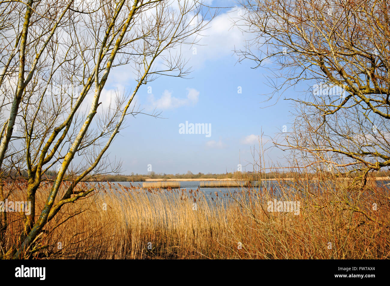 A view of Rockland Broads from the Wherryman's Way long distance path at Rockland St Mary, Norfolk, England, - Stock Image