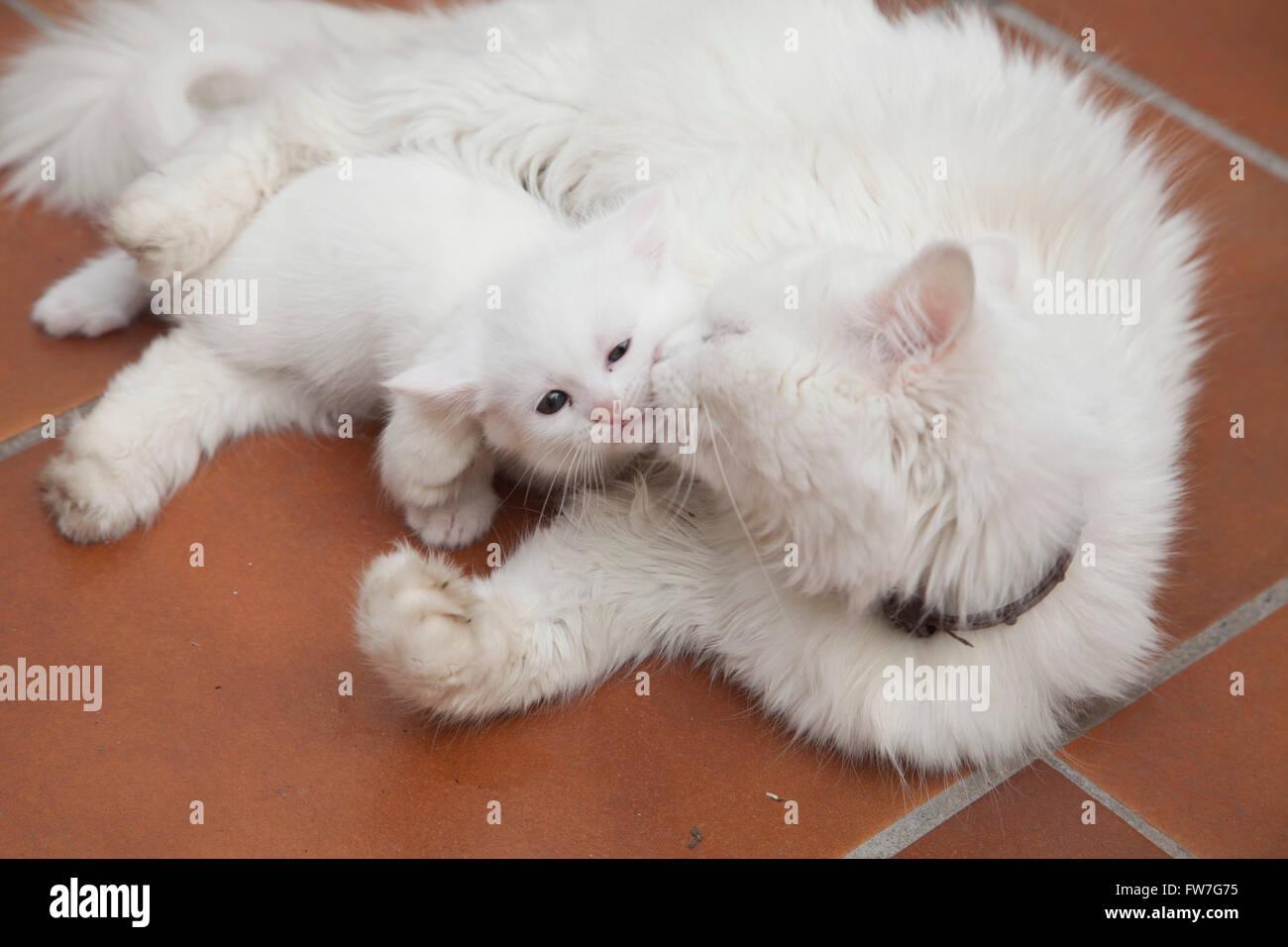 Cat, animal, domestic, tender, sweet, relaxing Stock Photo