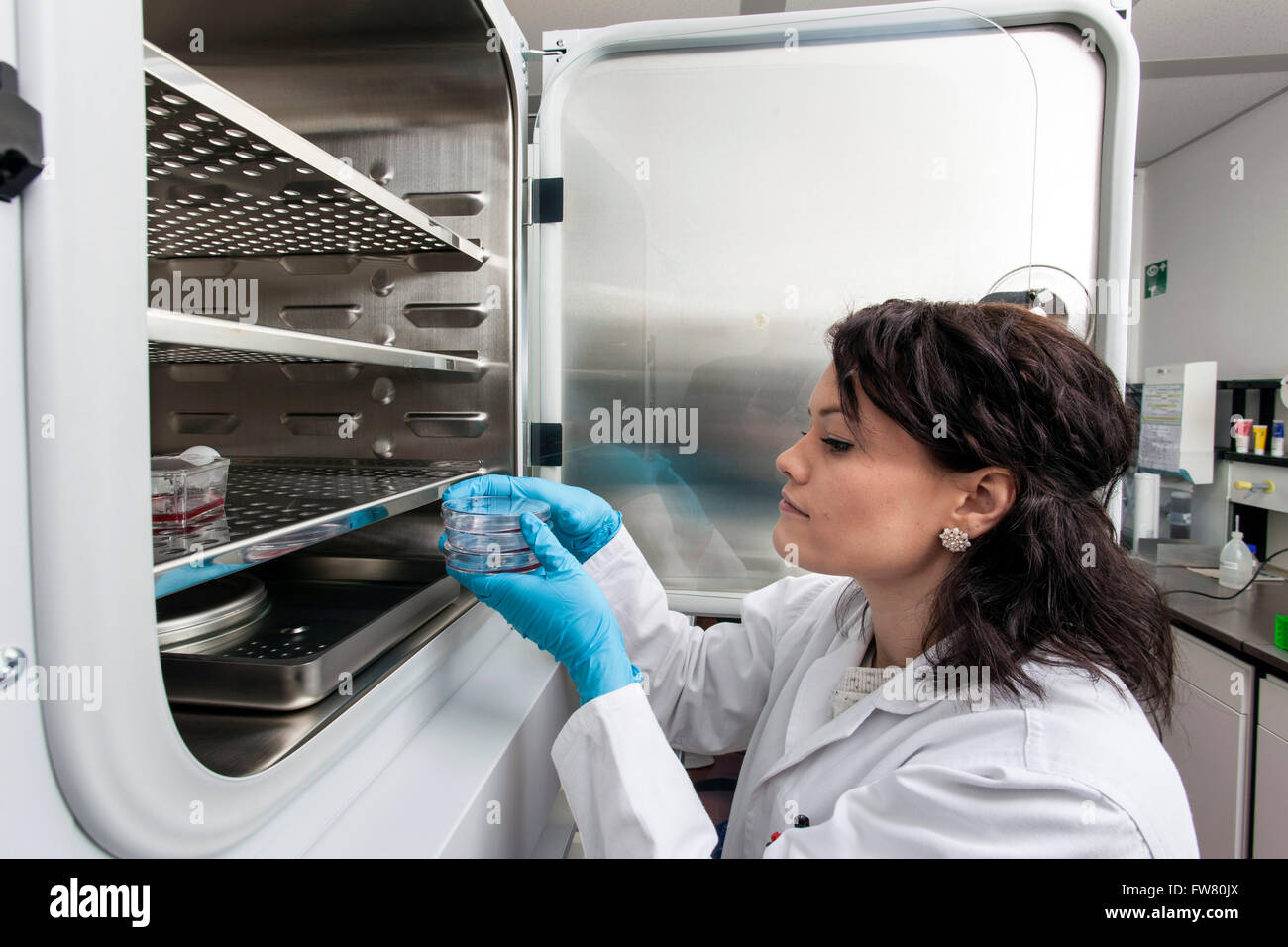 Scientist at a incubator. - Stock Image