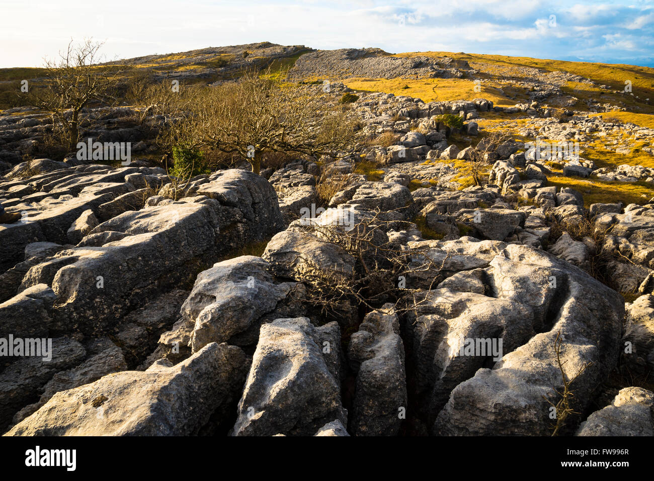 Limestone pavement on Farleton Fell South Lakeland Cumbria - Stock Image