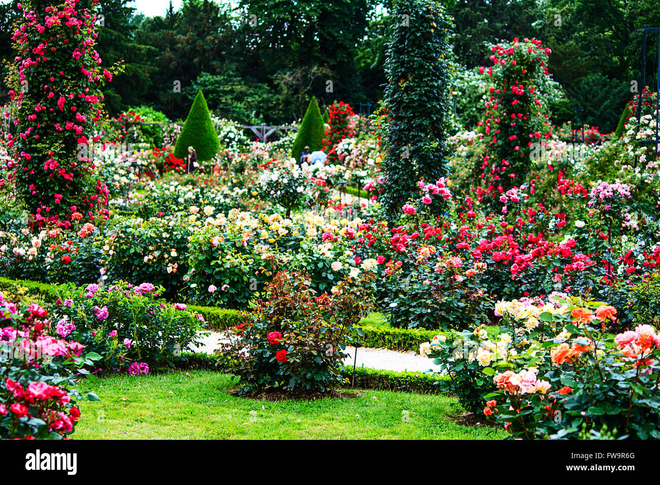 Paris- Bois de Boulogne classic rose garden in the Roseraie de Bagatelle Stock Photo