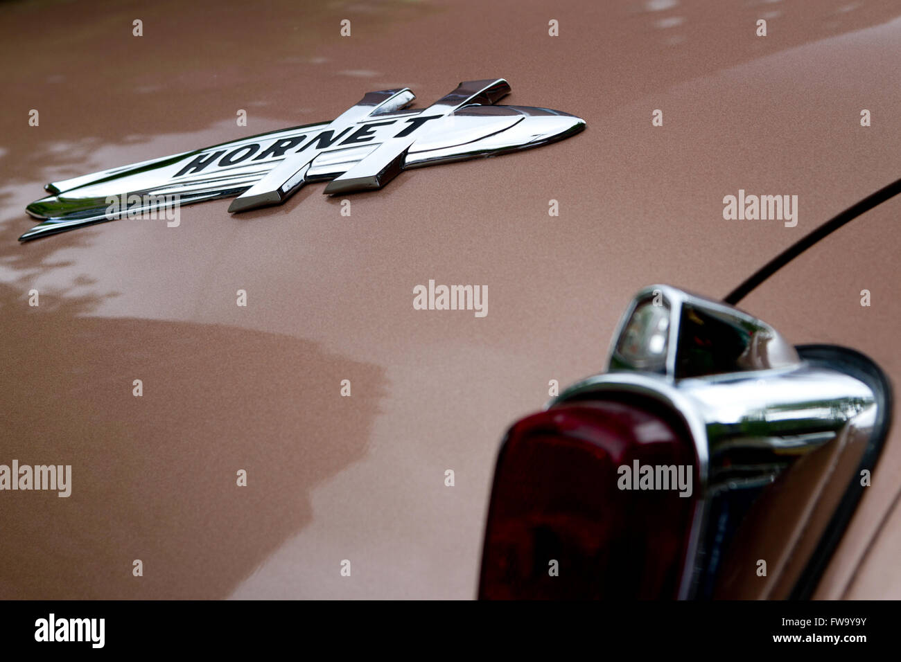 Rear View Of A Brown Hudson Hornet Stock Photo Alamy