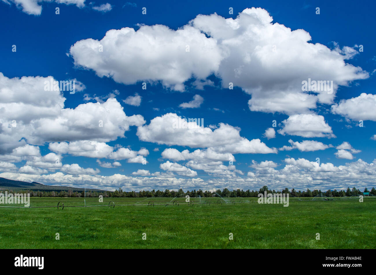 Green pasture being irrigated on a farm in eastern Oregon - Stock Image
