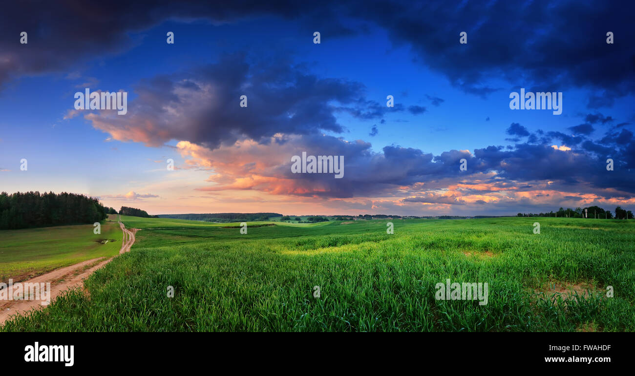 Green fields after spring rain in Belarus - Stock Image