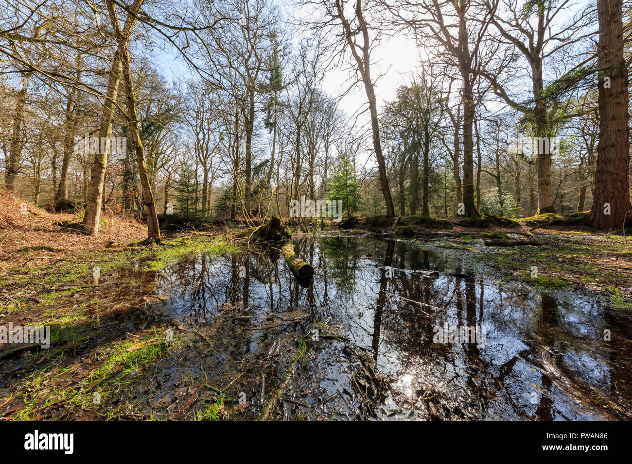 Blackwater with good reflection at New Forest National Park, UK - Stock Image