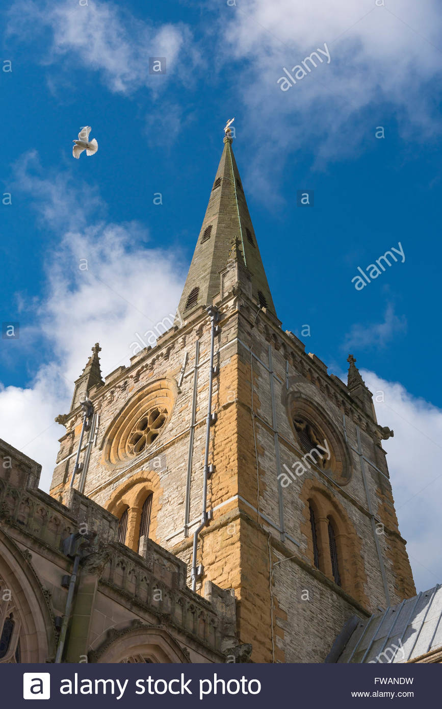 White dove flying over church tower, Tower and spire of Holy Trinity Church, site of Shakespeare's tomb, in - Stock Image