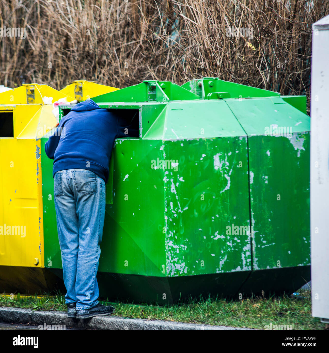 Homeless man is searching for food in garbage - Stock Image