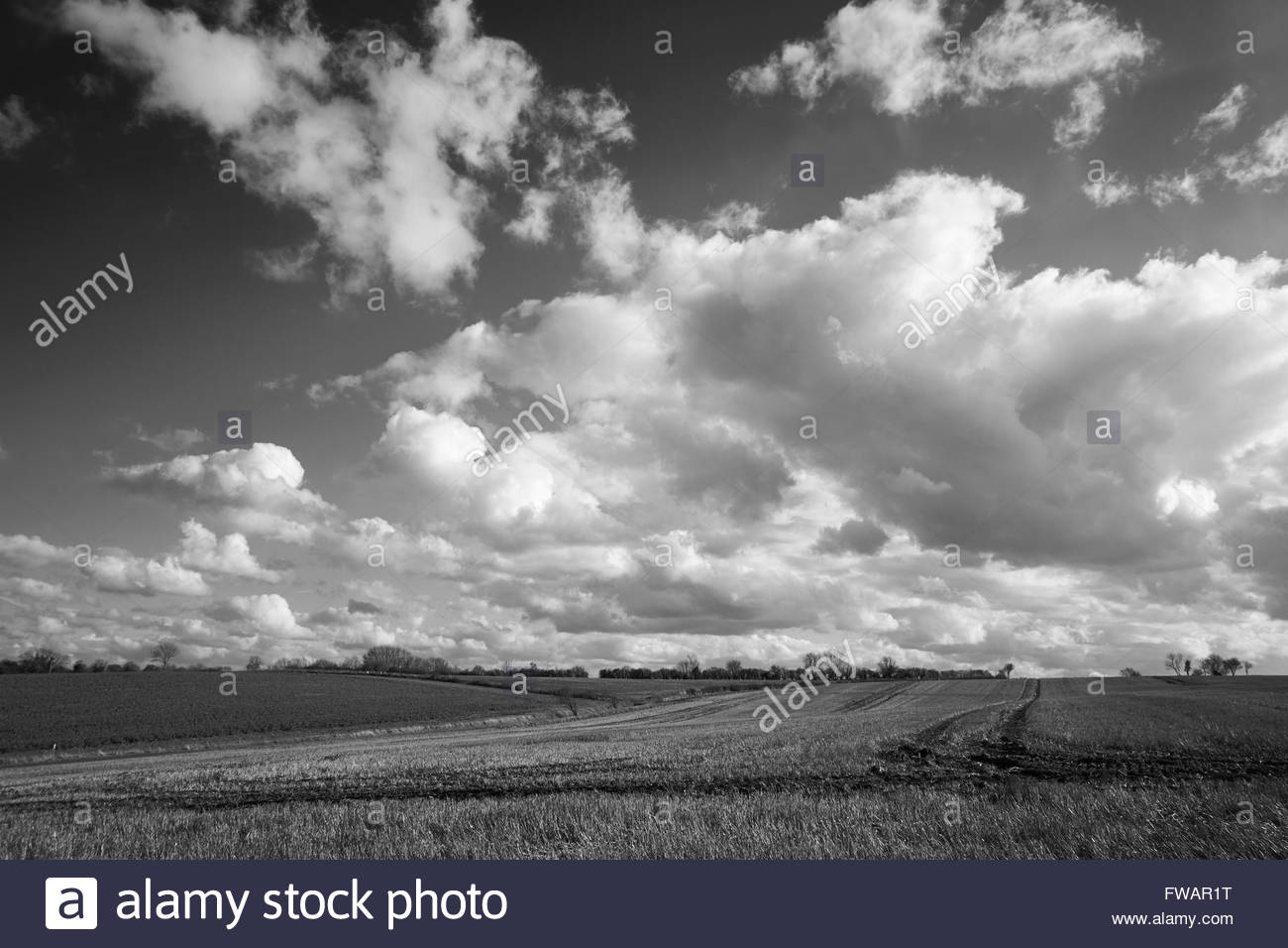 Cumulonimbus clouds forming against a bright sky over agricultural land. Bedfordshire, UK. - Stock Image