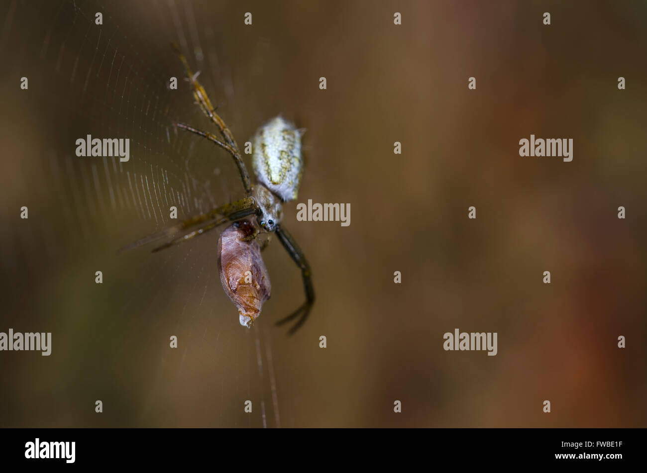 Spider and its victim - Stock Image