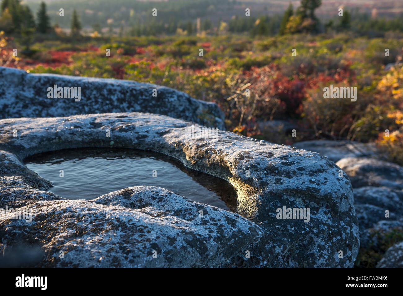 Close up of a small pool of water in a stone boulder found on a hike in the morning light against autumn foliage. Stock Photo
