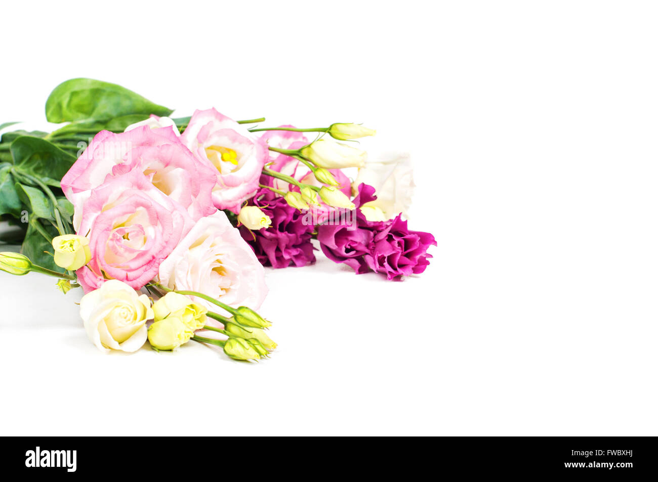 Beautiful flowers in studio on the light background - Stock Image