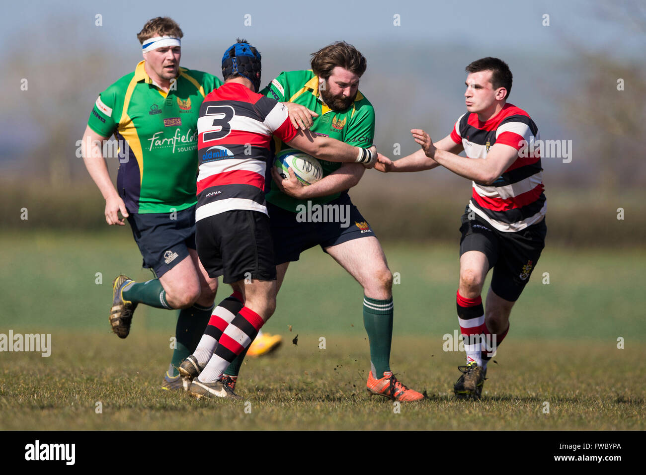 NDRFC 1st XV versus Frome RFC 1st XV,  Thomas Gale of North Dorset RFC in action. - Stock Image
