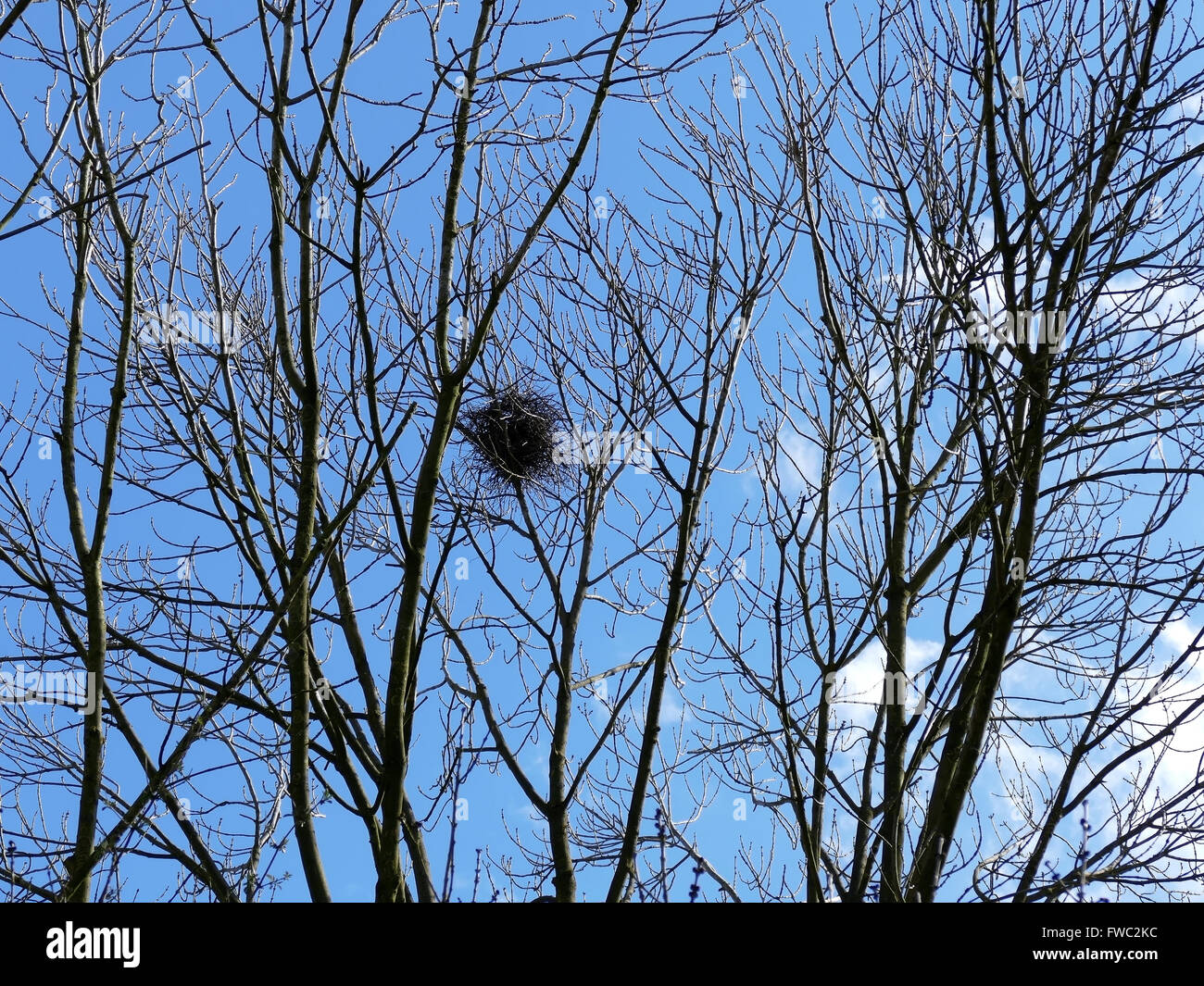 Bird nest high up in trees with blue sky - Stock Image