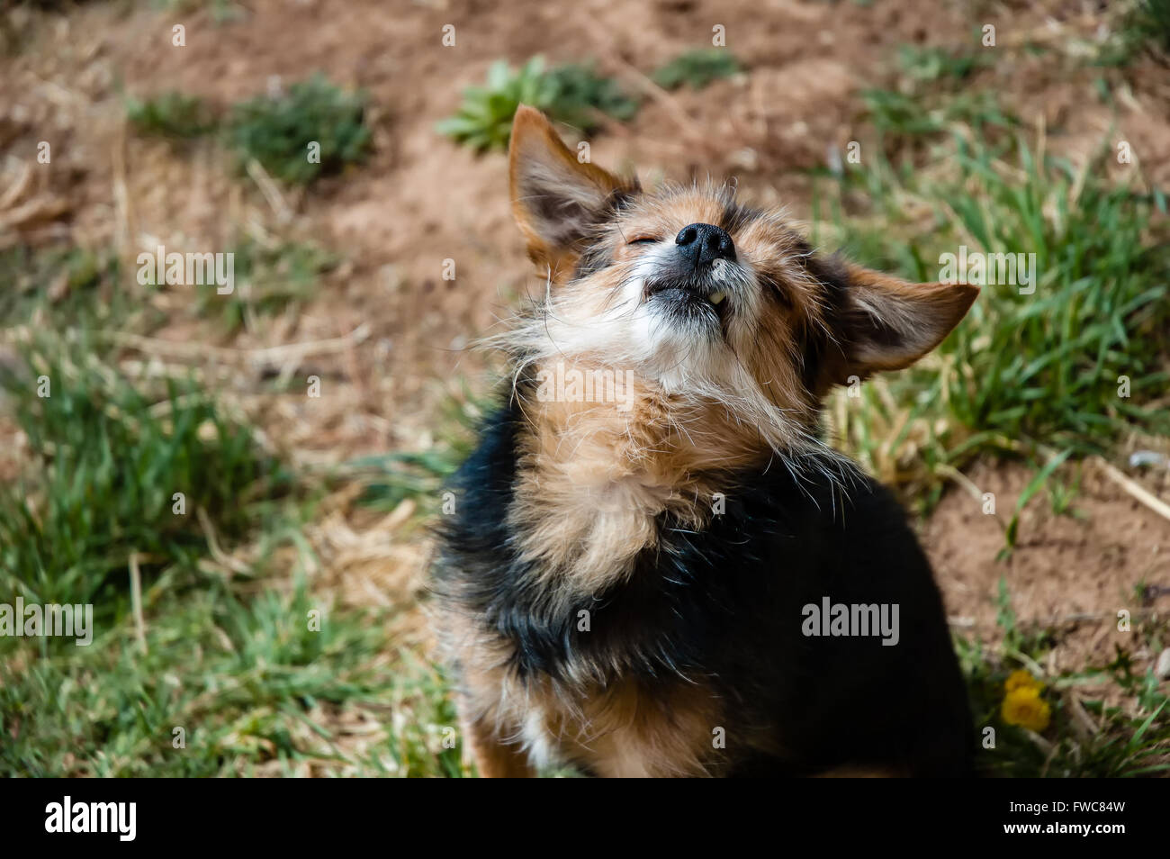Dog Taking In The Sun - Stock Image