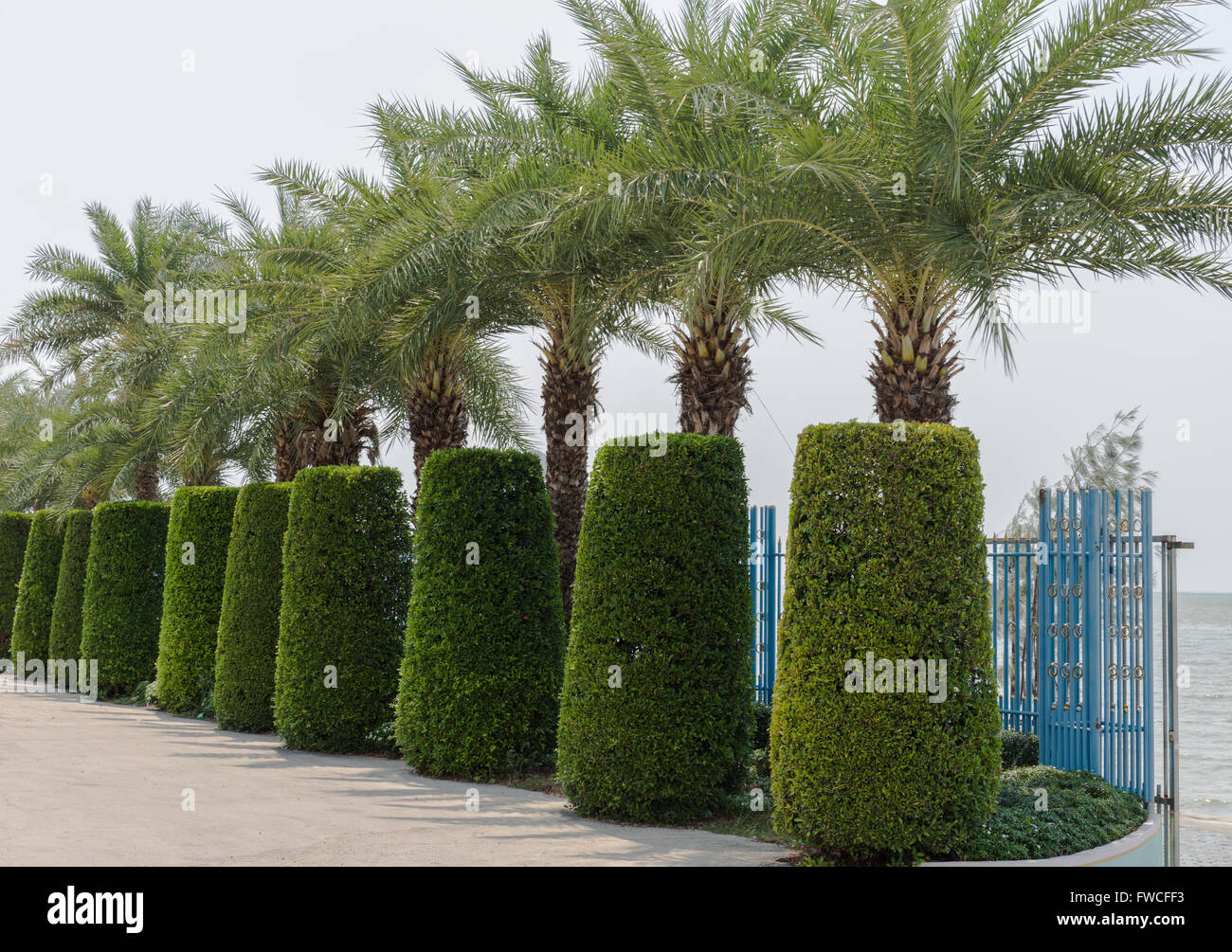 palm trees and hedges - Stock Image