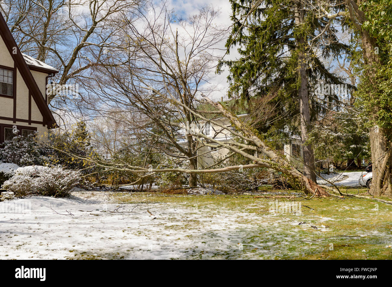 Cold Weather Damage Stock Photos & Cold Weather Damage Stock Images ...