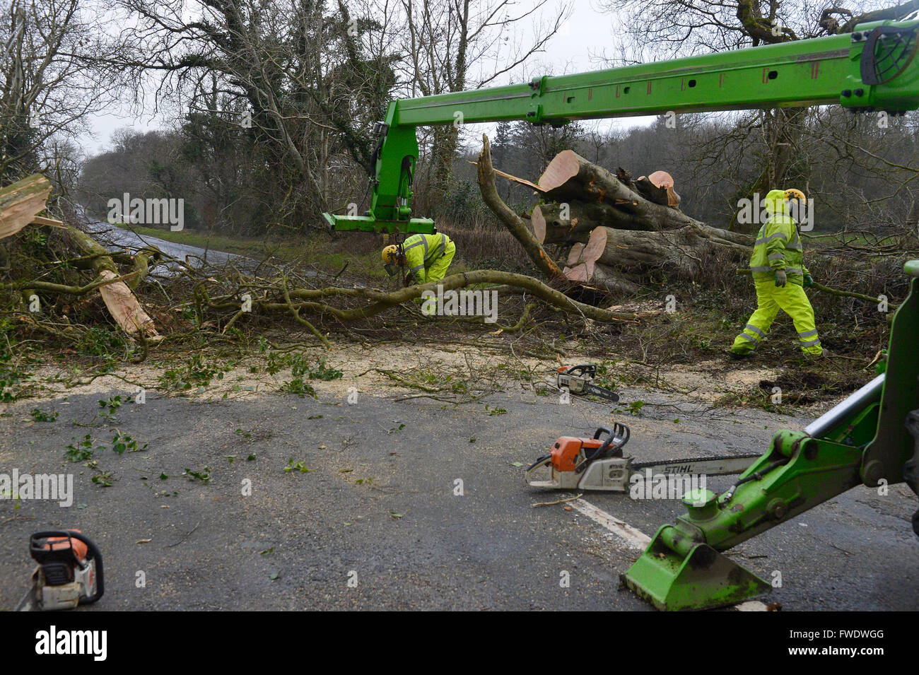 Clearing trees felled by gales force winds in Londonderry, Northern Ireland. - Stock Image