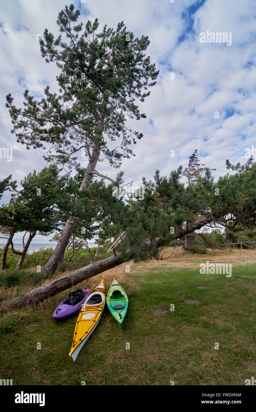Sea kayaks, summer ready at shore behind pine trees, Scandinavia, Denmark, Havnsoe - one kayak for for a female, Stock Photo