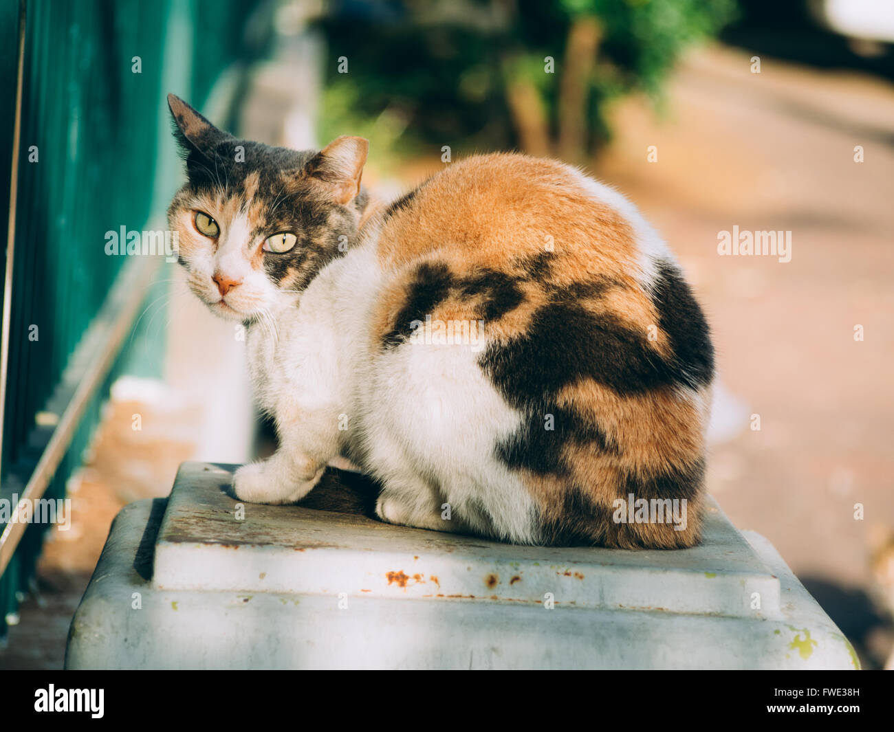 Alley cat - Stock Image