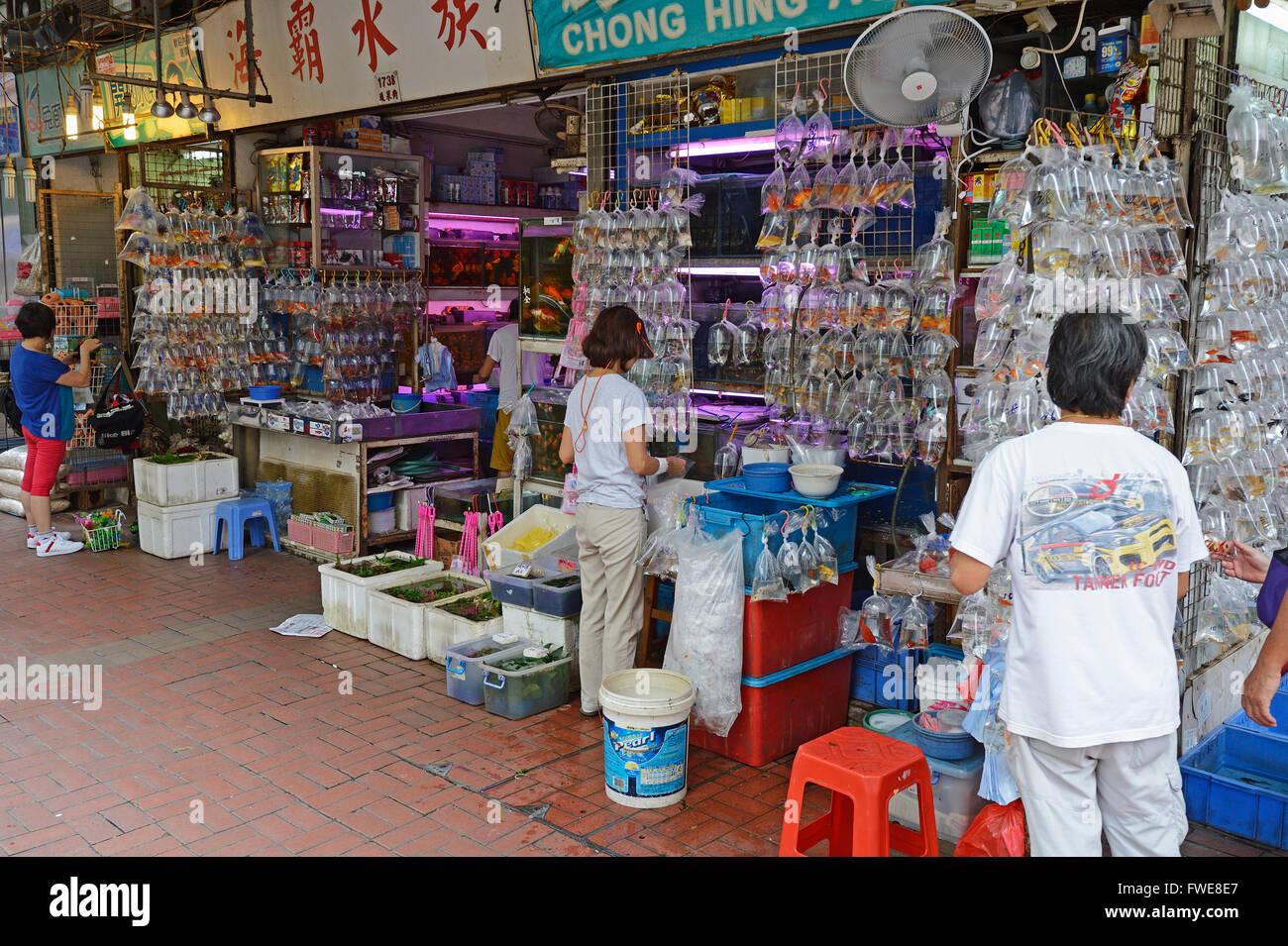 Prepacked Aquarium Fish Aquarium Shop Kowloon Hongkong China