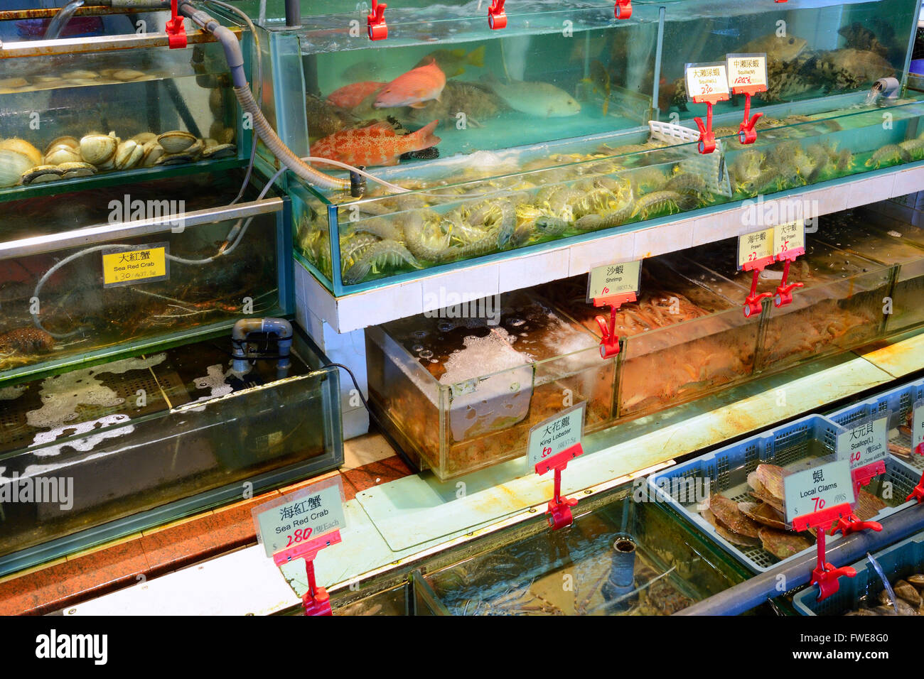 fresh, living seefood and fish, Seafood restaurants, harbour, Lamma Island, Hongkong, China - Stock Image